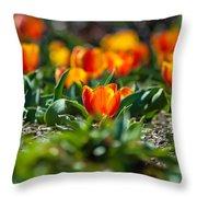 Field Of Orange Tulips Throw Pillow