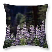 Field Of Summer Wildflowers Backlit Lupine  Throw Pillow