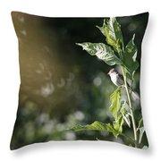 Field Sparrow Throw Pillow