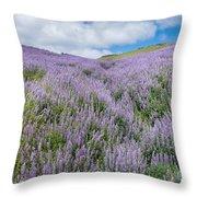 Fields Of Lupine 3 Throw Pillow