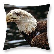 Fierce Bald Eagle Throw Pillow