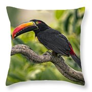 Fiery Tailed Aracari Toucan Out On A Limb Throw Pillow
