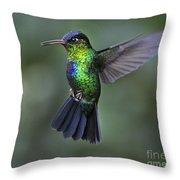 Fiery-throated Hummingbird..  Throw Pillow