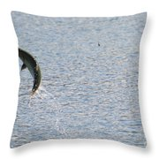 Fighting Chinook Salmon Throw Pillow