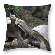 Fighting Galapagos Giant Tortoises Throw Pillow