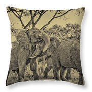fighting male African elephants Throw Pillow