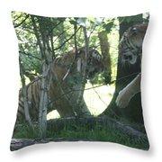 Fighting Siberian Tigers Throw Pillow