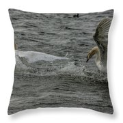 Fighting Swans Throw Pillow