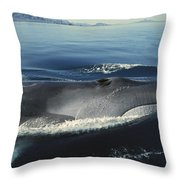Fin Whale In Sea Of Cortez Throw Pillow