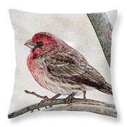 Finch Art Throw Pillow