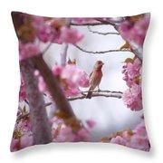 Finch Frame Throw Pillow