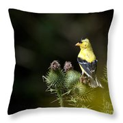 Finch In The Thistles Throw Pillow