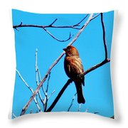 Finch On Branch 031015a Throw Pillow