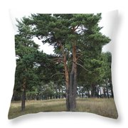 Fine Pine Throw Pillow