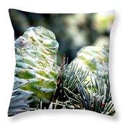 Fir Cone Throw Pillow