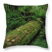 Fir Nurse Log In Rainforest Pacific Throw Pillow