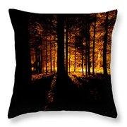Fir Trees Back Lit  Throw Pillow