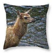 Firehole River Elk Fawn Throw Pillow