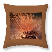 Firework Anemone Throw Pillow
