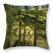 Firs And Ferns Throw Pillow