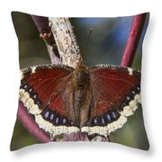 First Butterfly Of Spring Throw Pillow
