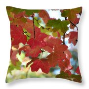 First Signs Of Fall  Throw Pillow