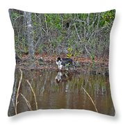 Fishing Feline Throw Pillow