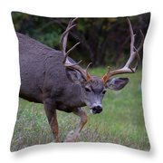 Five By Five Throw Pillow