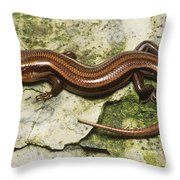 Five-lined Skink Throw Pillow