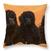 Five Poodle Puppies  Throw Pillow