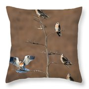 Five White-tailed Kite Siblings Throw Pillow