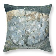 Flamboyant Cuttlefish Eggs Throw Pillow