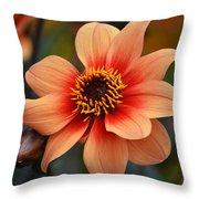Flamboyant Dahlia. Throw Pillow