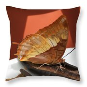 Flame-bordered Charaxes Butterfly #2 Throw Pillow
