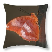 Flame-bordered Charaxes Butterfly #3 Throw Pillow