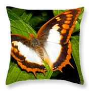Flame Bordered Charaxes Butterfly Throw Pillow