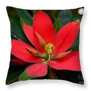 Flame Of Jamaica Throw Pillow