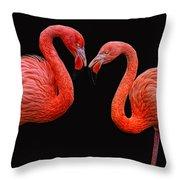 Flamenco ... Baby Throw Pillow