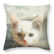 Flamepoint Siamese Kitten Throw Pillow