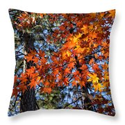 Flaming Maple Beneath The Pines Throw Pillow