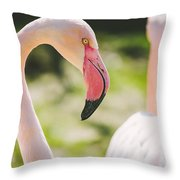 Flamingo Bird Portrait. Throw Pillow