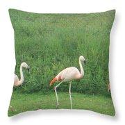 Flamingo March Throw Pillow