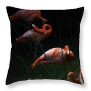 Flamingo Morning Throw Pillow