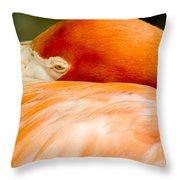 Flamingo Napping Throw Pillow