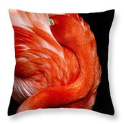 Flamingo On Black Throw Pillow by Donna Proctor