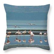 Flamingo On Lake Nakuru Throw Pillow