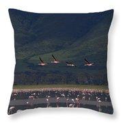 Flamingos  #6590 Throw Pillow