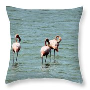 Flamingos Gathering Together Throw Pillow