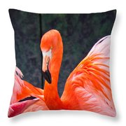 Flamingos Throw Pillow