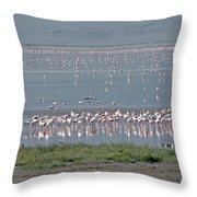 Flamingos On Lake Magadi Throw Pillow